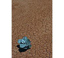 Desert Life Photographic Print
