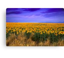Sunflowers of Dusk Canvas Print