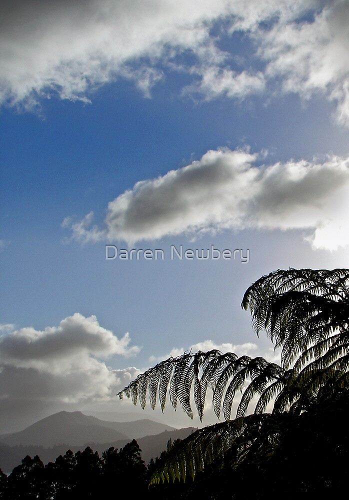 New Zealand Fern Silhouette by Darren Newbery