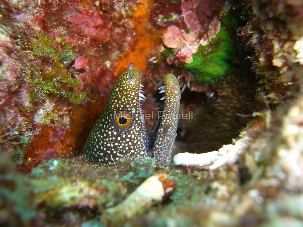 Moray at Horseshoe by Michael Powell