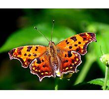 Copper Beauty Photographic Print