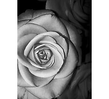 Rose 1 Photographic Print
