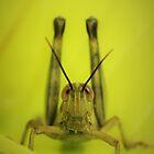Grasshopper stare by AnnaKT