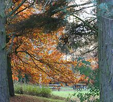 Autumn in the Park by markwalton3