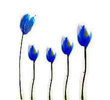 Blue tulip flowers by bardenne