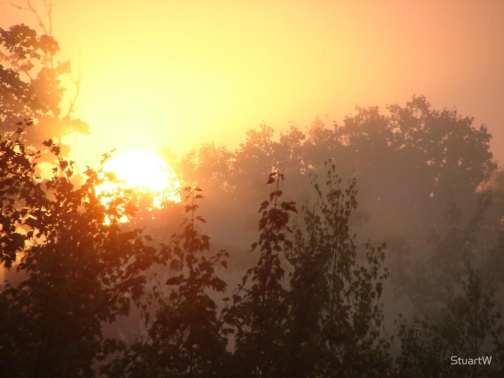 Misty Morning by StuartW