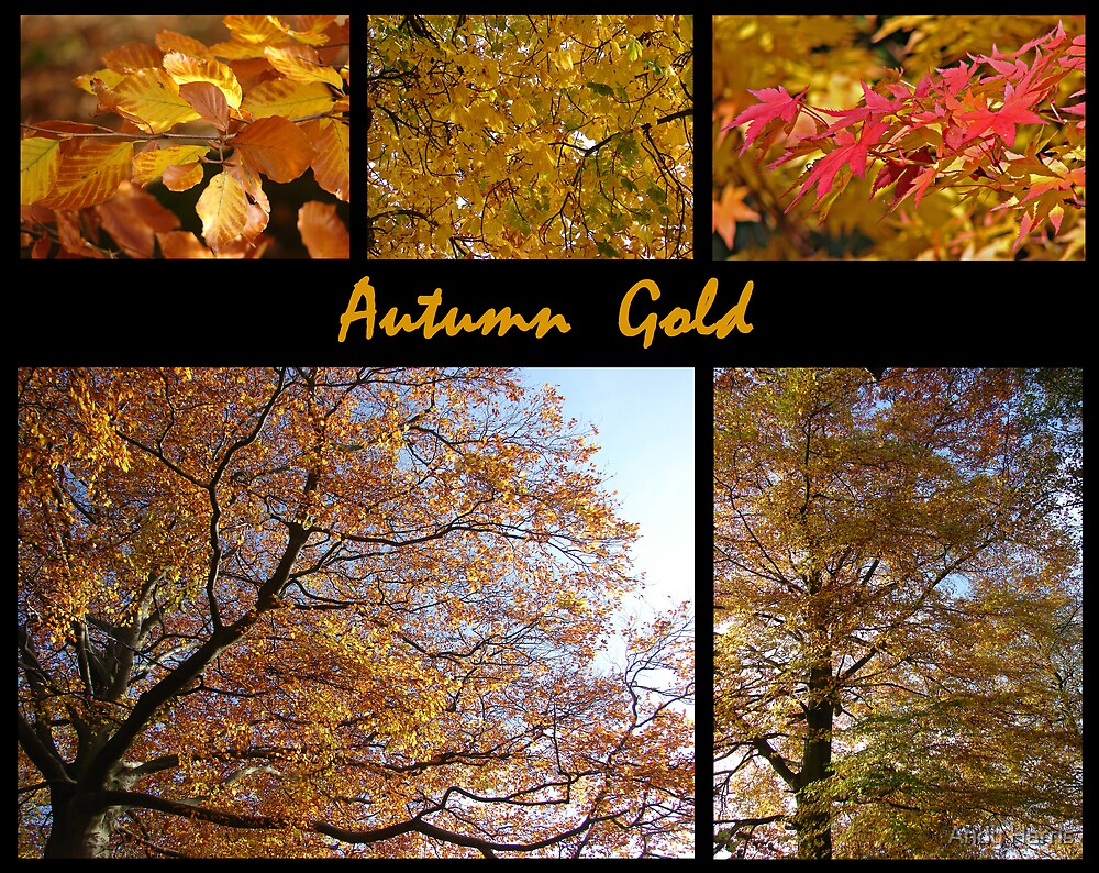 Autumn Gold by Andy Harris