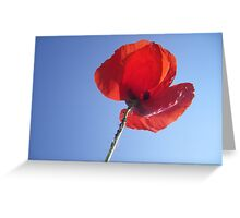 Poppy in the Sky Greeting Card