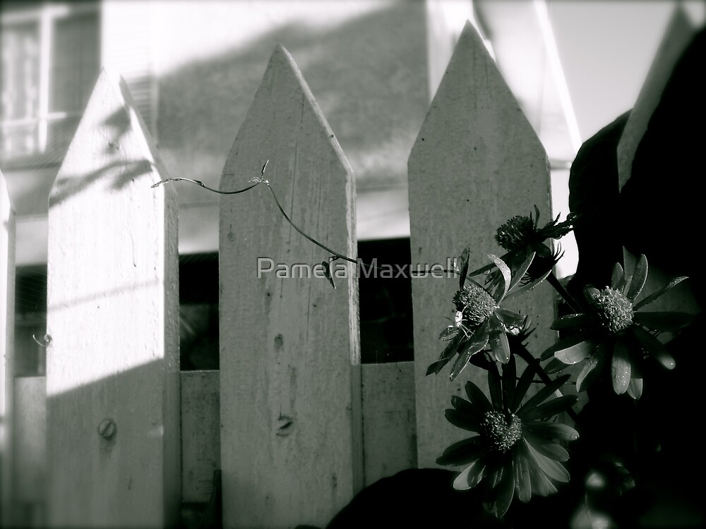 Flower by a Fence - Black and White by Pamela Maxwell