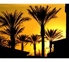Silhouettes of Palm Photographic Print