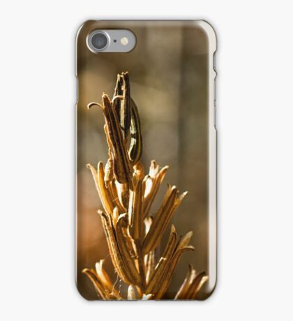 Evening Primrose Seed Pods iPhone Case/Skin