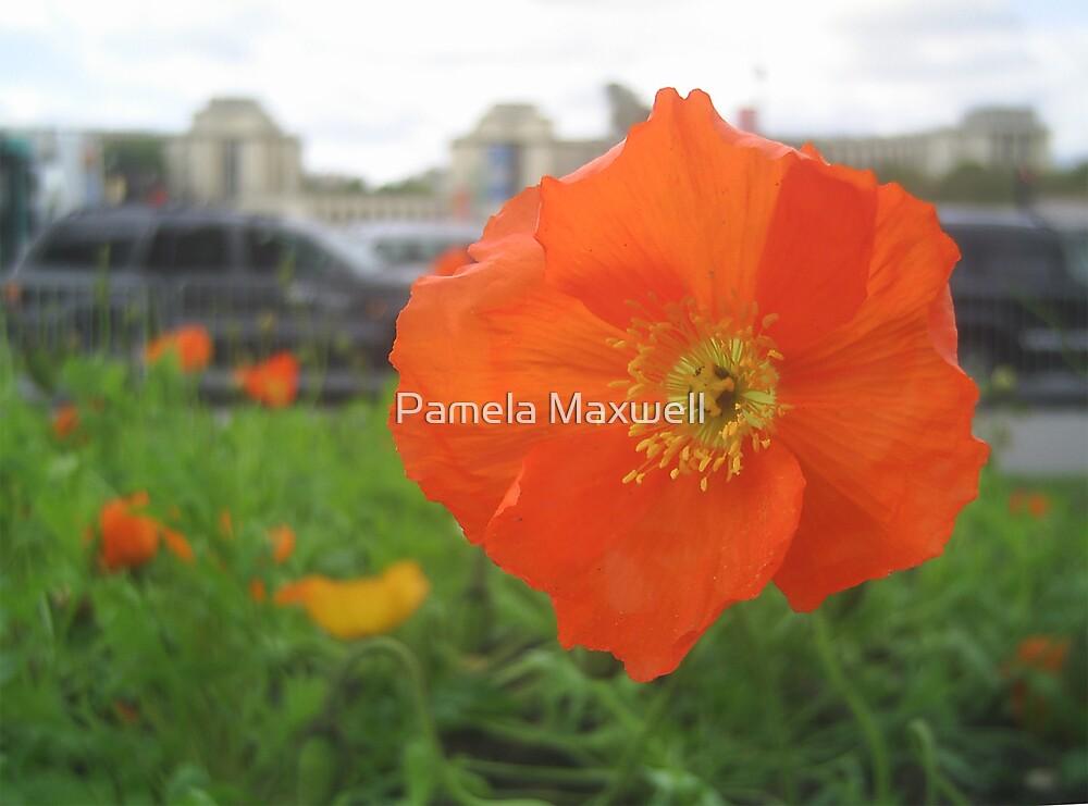 Poppy in Paris  by Pamela Maxwell