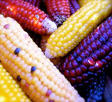 Festival Corn by Pamela Maxwell