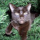 Christmas Kitty by MDossat