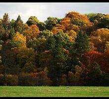 Autumn Trees by Chris Cutler