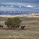 Horse Country by CarolM
