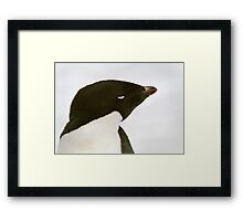 Sleeping Adelie Framed Print