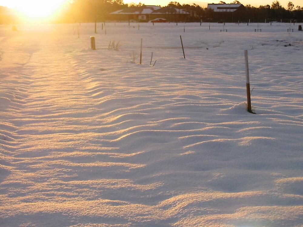 snowy times by diane740