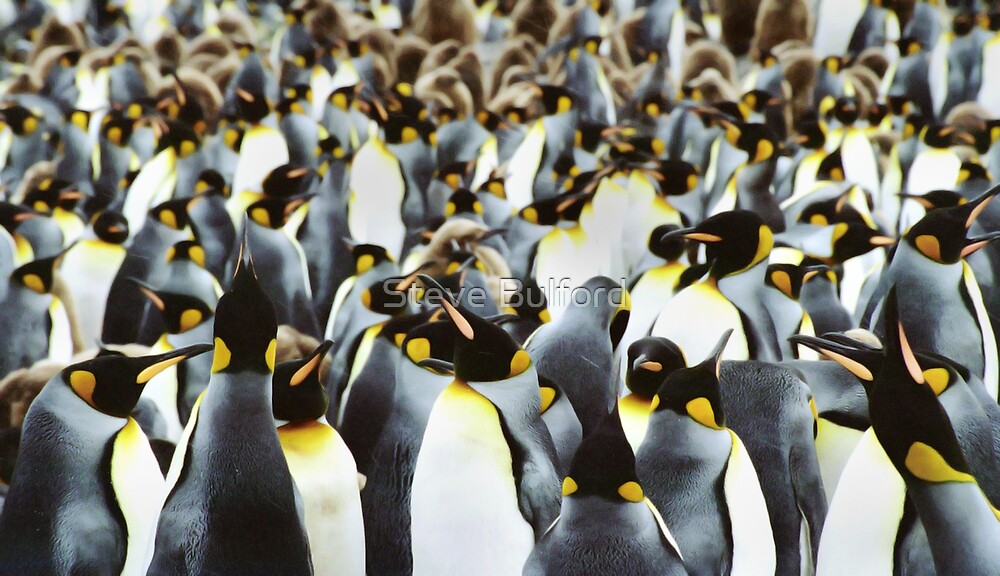 Penguin Power by Steve Bulford