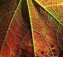 Leaf Details by AndWhyNotMister