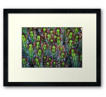 Cactus cluster Framed Print