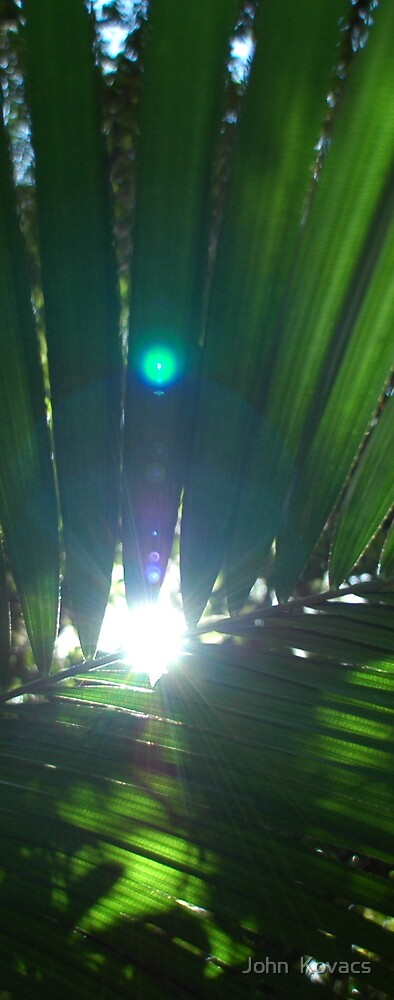 rainforest leaves with sunlight in background by John  Kovacs