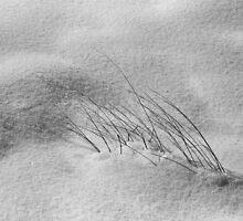 Wisper by mymamiya