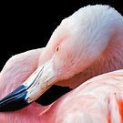 Flamingo twist by Eyal Nahmias