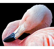 Flamingo twist Photographic Print