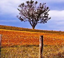 Lone Tree by jlynn
