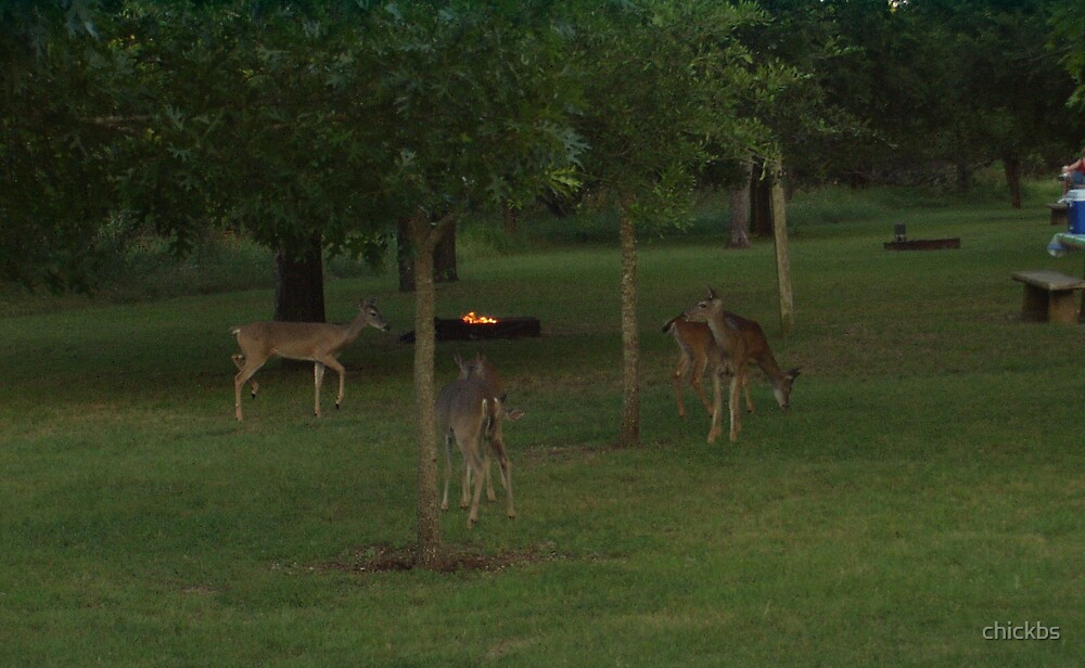 Deer in TX by chickbs