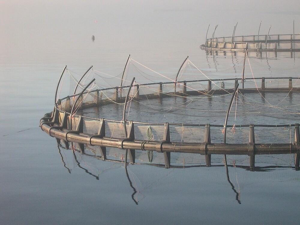 Salmon cribs by Roslyn Slater