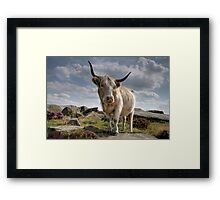Highland Cow on Baslow Edge Framed Print