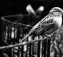 Birds in Madison Square Park, NYC by Kayleigh Morin