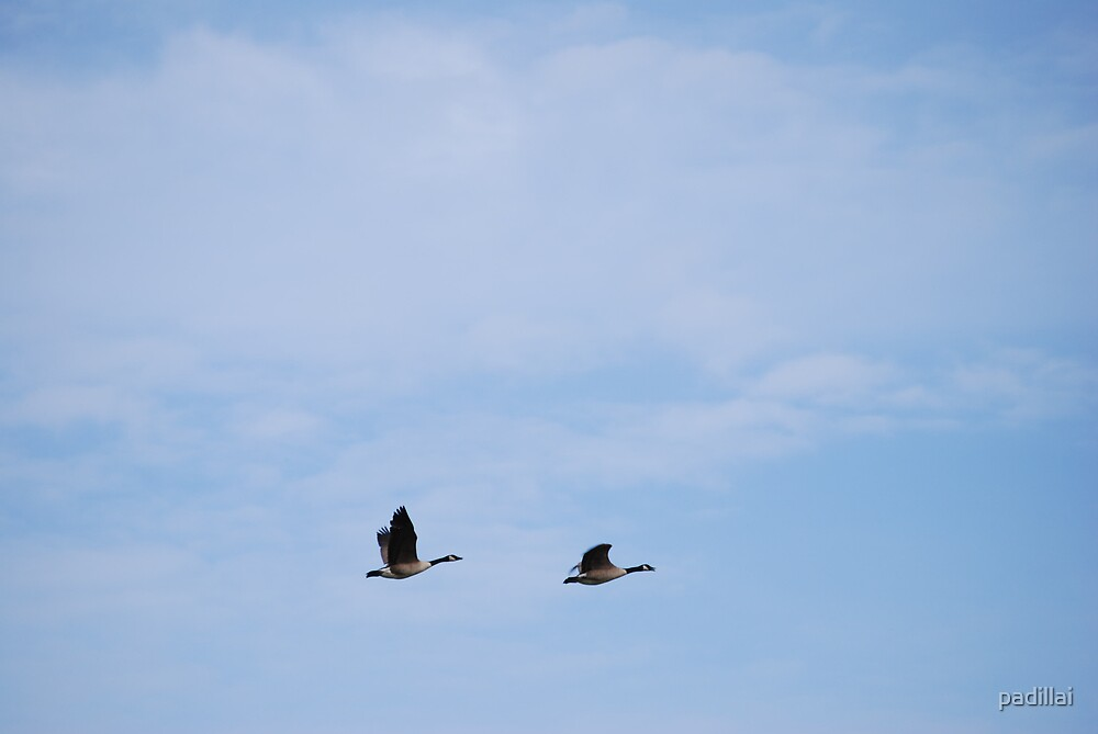 Flying Geese I by padillai