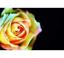 rosey Photographic Print