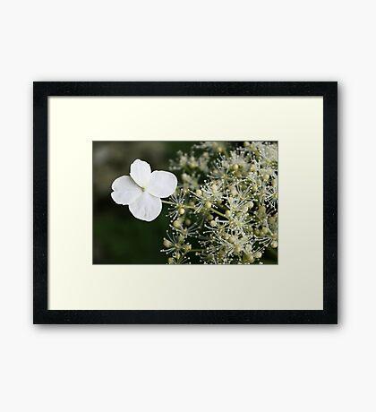 Fabulous flora Framed Print