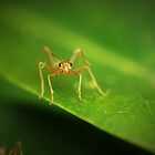 Ant stare by AnnaKT