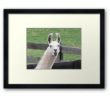NO!     I AM NOT THE EASTER BUNNY!! Framed Print