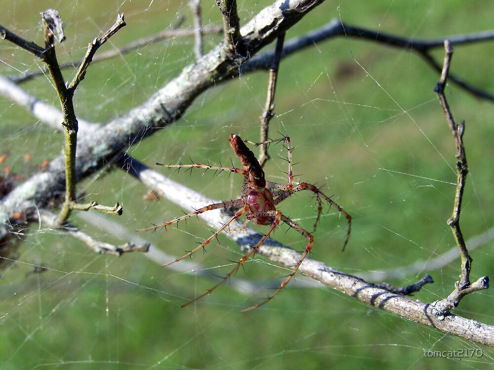 spider by tomcat2170