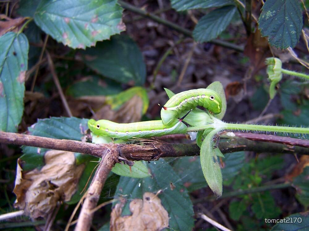 green caterpillars by tomcat2170