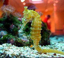 Yellow Seahorse by padillai