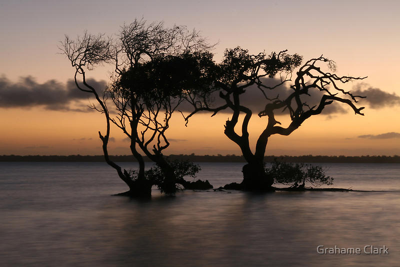 Twilight Trees by Grahame Clark