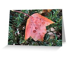 Wet maple Leaf Greeting Card