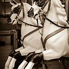 Carousel horses by Mike Warman