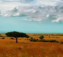 Wonder of the Mara by Sharon Bishop