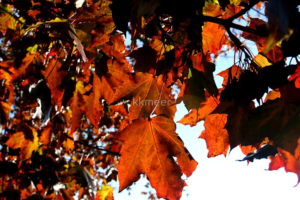 Autumn is here by kkmeer