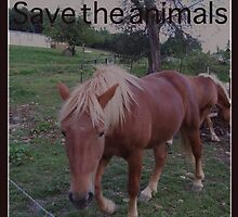 horses by melynda blosser