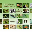 Hope I&#x27;m not bugging you . . . by Bonnie T.  Barry