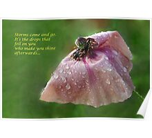 poppy after the rain Poster